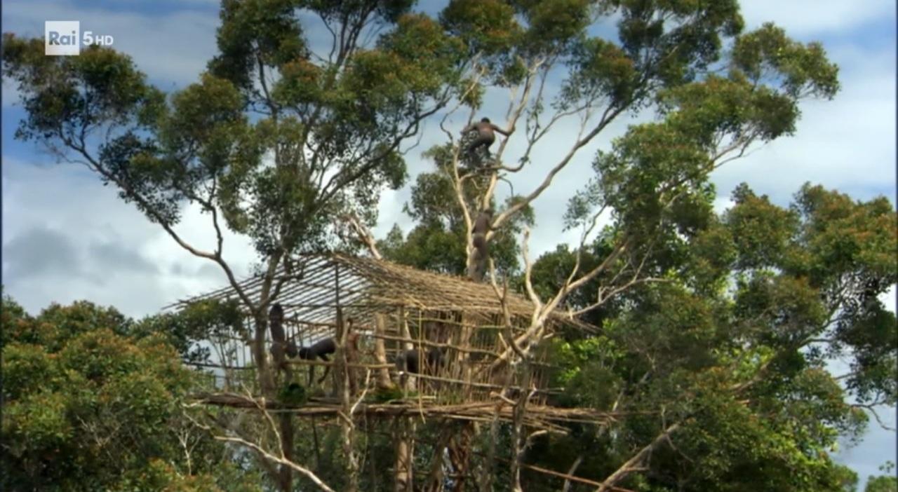 L 39 uomo e la giungla esperienziando vitae - Casa sugli alberi ...